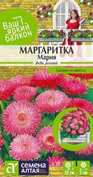 Цветы Маргаритка Мария